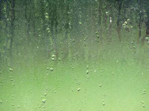 dirty-wet-windows-2-462224-m